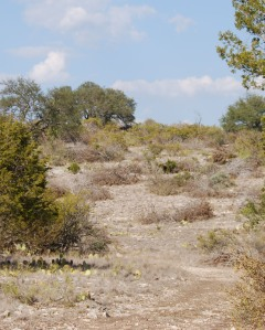 dry and thirsty land