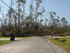 Katrina 6 – A view of the woods down one of our streets. It seems that literally every other tree in Diamondhead is either snapped or blown over. If a tree still stands, its limbs were ravaged by the wind and water.